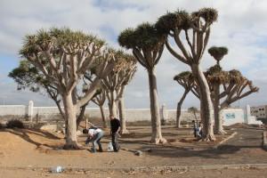 Fotgrafía publicada en medios de comunicación de las islas Canarias. Dragonal de Salinetas