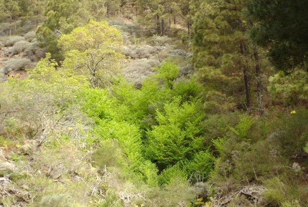 El árbol bosque